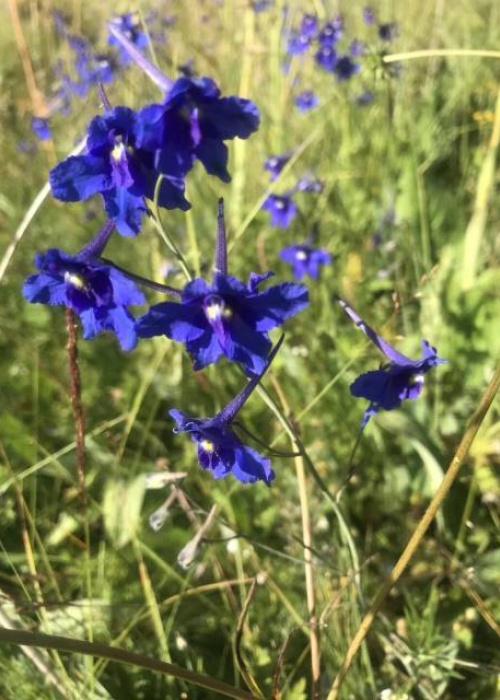 flower8